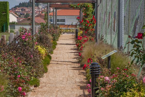 """Chamboeuf, """"un village de roses"""""""