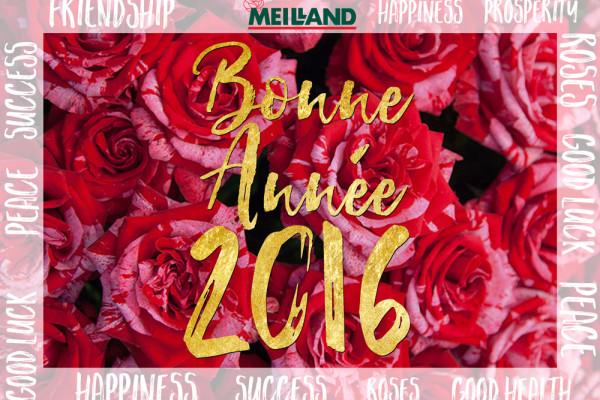 Meilland Happy New Year 2016