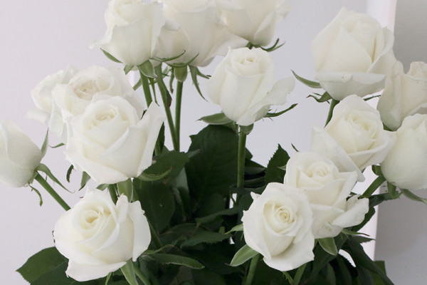 BINGO® White Meilotrie