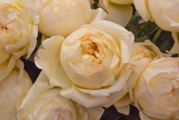 how to clean cut roses from florist