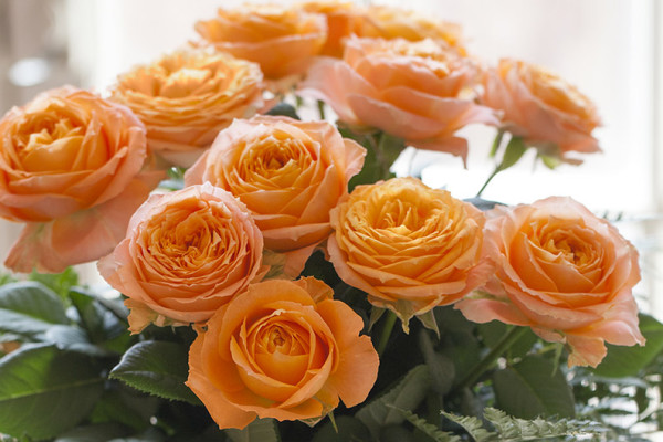 Orange-ROMANTICA-Meivolupta-(12_8799)_HD