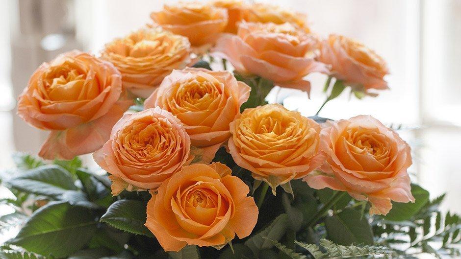 Varietes De Roses Fleur Coupee Meilland International