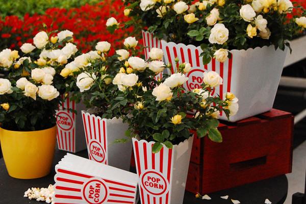 Popcorn-DRIFT'-Novarospop-US2_Web